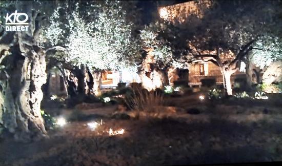 Gethsemani jardin des oliviers