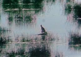Perou lac titicaca femme