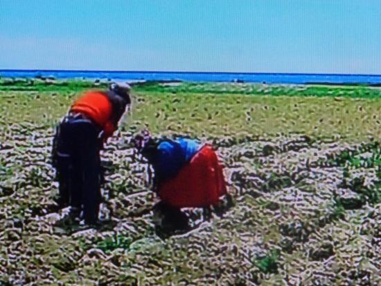 PEROU travail des champs