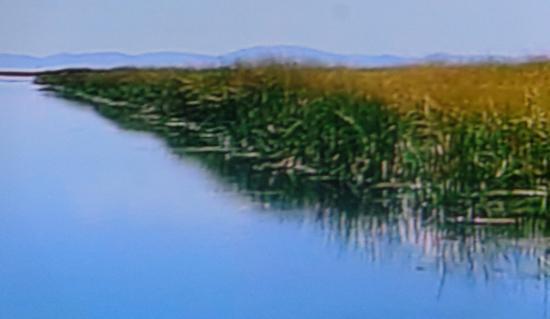 Perou lac titicaca roseaux